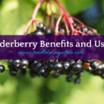Elderberry Benefits And Uses