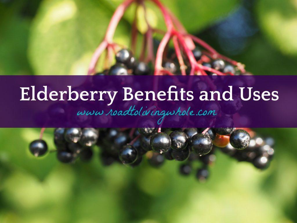elderberry benefits uses
