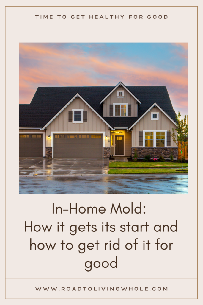 In-Home Mold How it gets its start and how to get rid of it for good